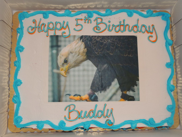 Buddy's 5th Hatch-Day