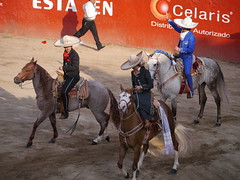 rodeo(0.0), western riding(0.0), pack animal(0.0), horse harness(0.0), animal sports(1.0), equestrian sport(1.0), sports(1.0), western pleasure(1.0), barrel racing(1.0), traditional sport(1.0),