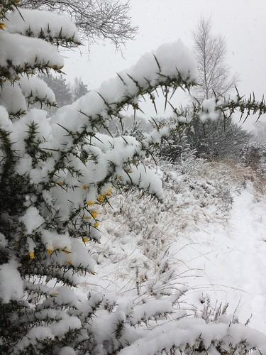 Snow on Yateley Common