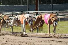 The 8, 7 and the 5 coming down the stretch at Southland