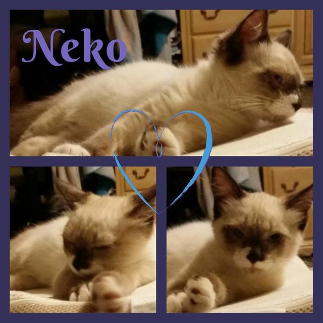 Neko as a Kitten