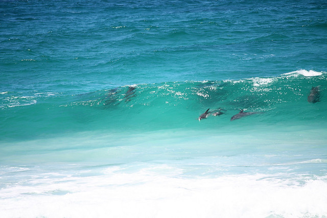 Dolphins at Pennington Bay