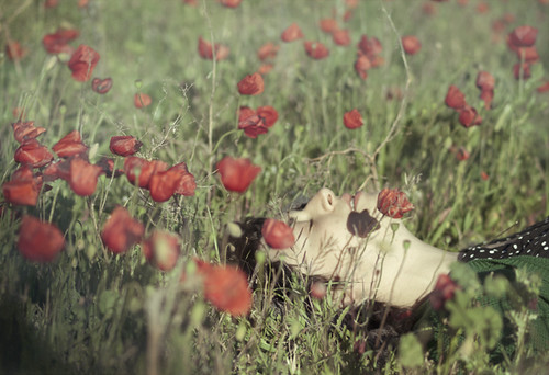 amapolar by marietta cuxufleta (vendo mis trabajos, de verdad)