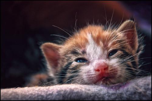 newborn by andrè t.