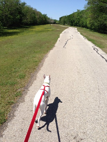 Tips for sharing multi-use trails with bikes and dogs