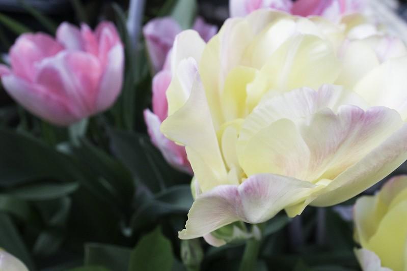 花咲く花壇-3