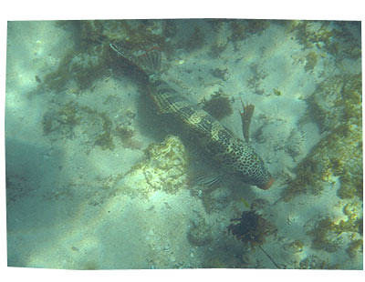 Karen Cheng 39 S Fashion And Life Blog Archive Snorkelling At Mettam S Pool