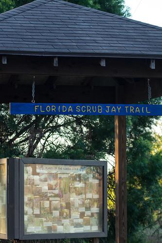 Florida Scrub-Jay Trail