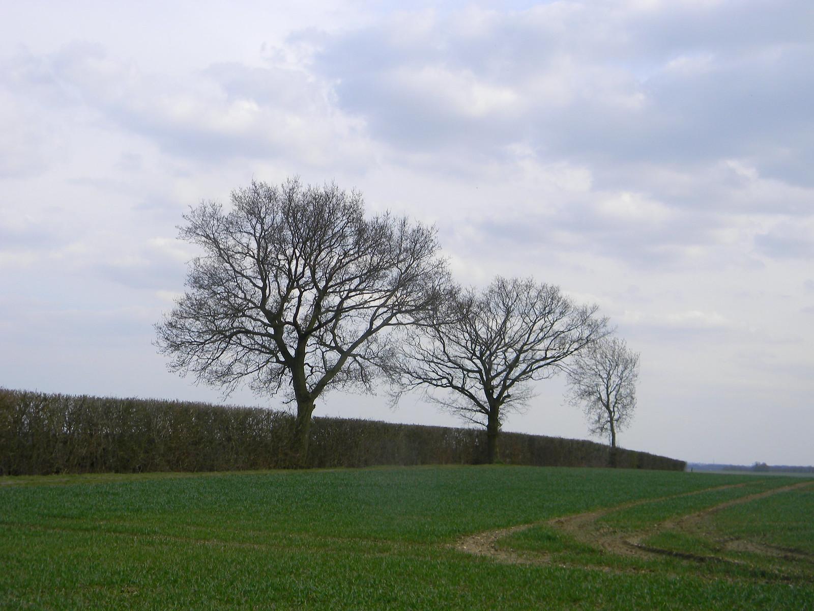 Three trees Wendens Ambo Circular