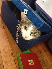 My cat in a box