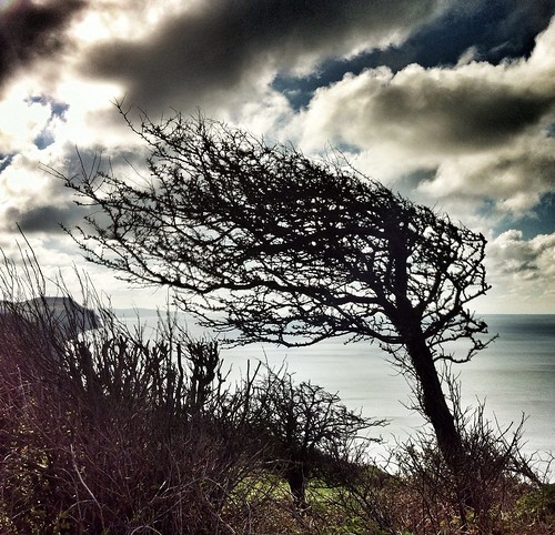 england cliff holiday tree clouds happy coast wind britain windy dorset hdr charmouth blinkagain slaterphotography adamslater