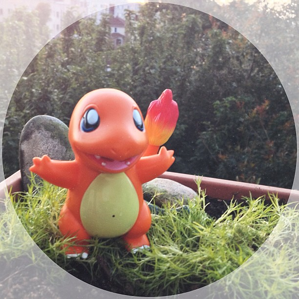 A wild voice activated Chinese #Charmander appeared! I captured him for $2.99 #pokemon