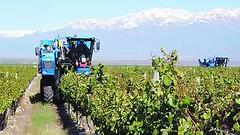 Los vinos ya vienen a toda máquina