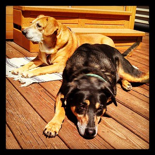 It's porch lounging season and the #hounds are happy! #dogstagram #happydog #sun #love #lazySunday