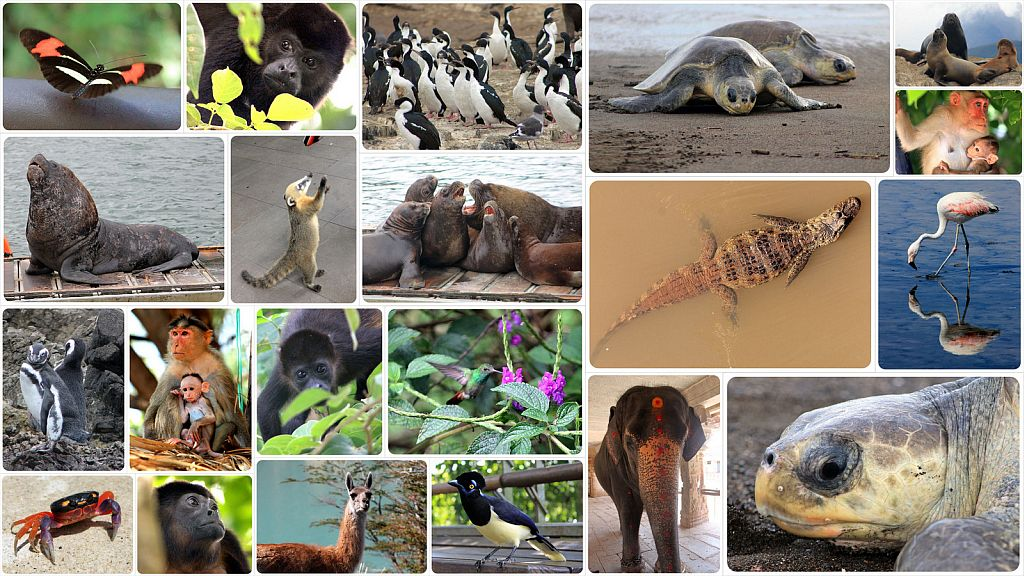 Wildlife in Latin America