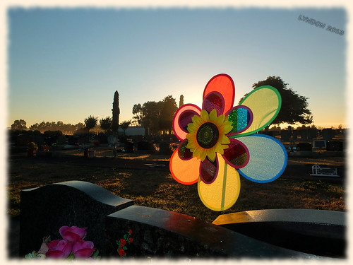 newzealand cemetery grave sunrise dawn lowlight fuji wairarapa carterton clareville xs1 fujifilmxs1