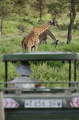 Tanzania-Masek-SafariDrive-127