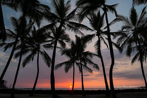 trees sunset vacation beach island hawaii big coconut palace sacred tropical refuge kahaluu