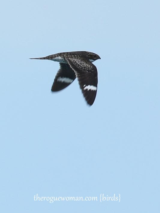 091514_bird28