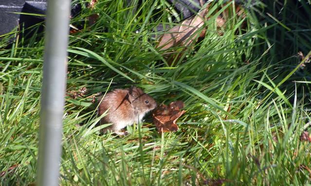 Field Mouse Taken through  the Caravan window  (3)