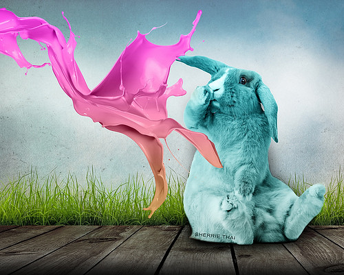 Colorful Splash on Rabbit