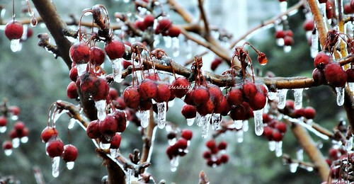 ice storm by cherithsky