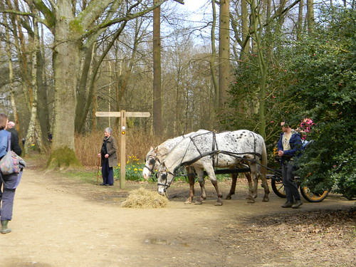 Horses, Winkworth Arboretum