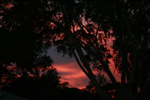 trees sunset nature florida beverlyhills citruscounty
