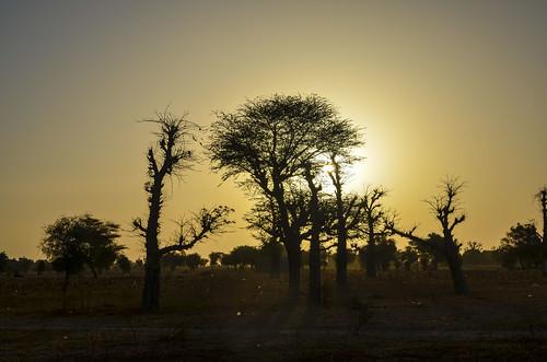 africa bicycle day165 senegal sunrise freewheelycom cyclotourisme cycling velo cycletouring jbcyclingafrica