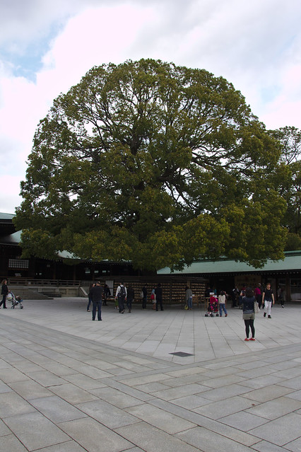 1139 - Meji Shrine en Yoyogi