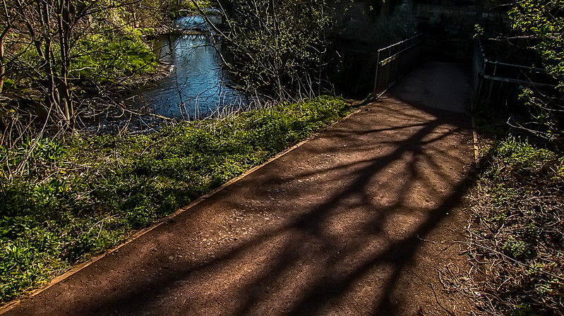 shadows along water of leith