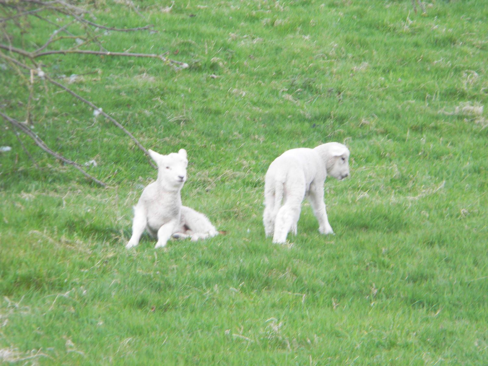 LAmbs Hurst Green to Wetherham