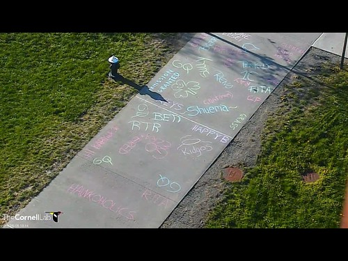 Hawkoholic sidewalk chalk