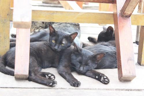 Adima's cats