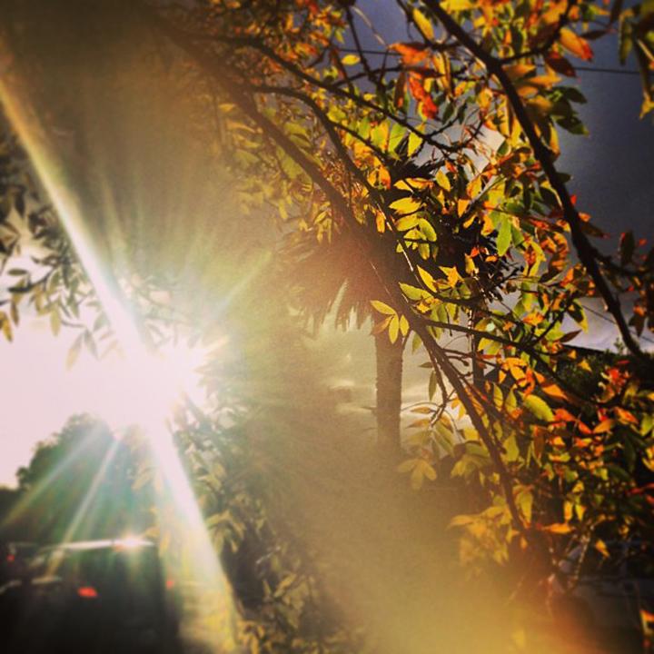 grey-sky-autumn-leaves