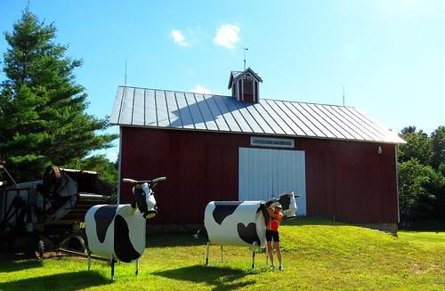 metal cows