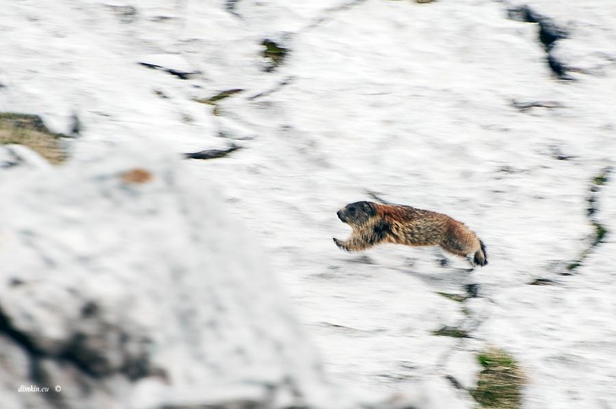 Tuenno, Trentino, Trentino-Alto Adige, Italy, 0.013 sec (1/80), f/8.0, 2016:07:01 11:54:31+00:00, 280 mm, 70.0-300.0 mm f/4.5-5.6
