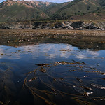 Fri, 09/23/2016 - 23:20 - Big_Sur_with_Macrocystis_Kelp_-_7_23_2007_-_big_sur_coast__CA-Gabara