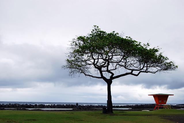 Onekahakaha Tree