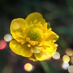 Bokeh Bloom