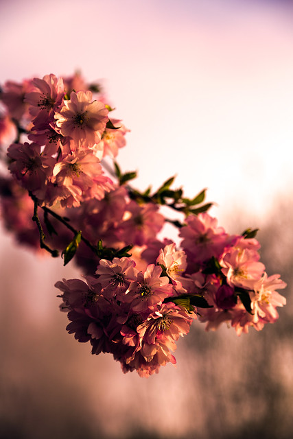 Spring Sunrise [Explored]