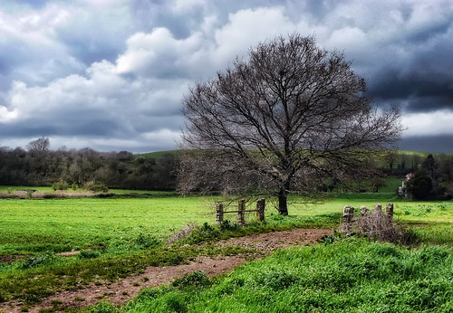 sky cloud tree nature landscape colours country