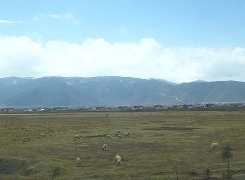 Yunnan13-Lijiang-Shangri La-Route (157)