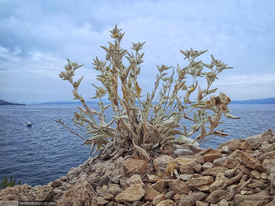13-Wild-Makarska