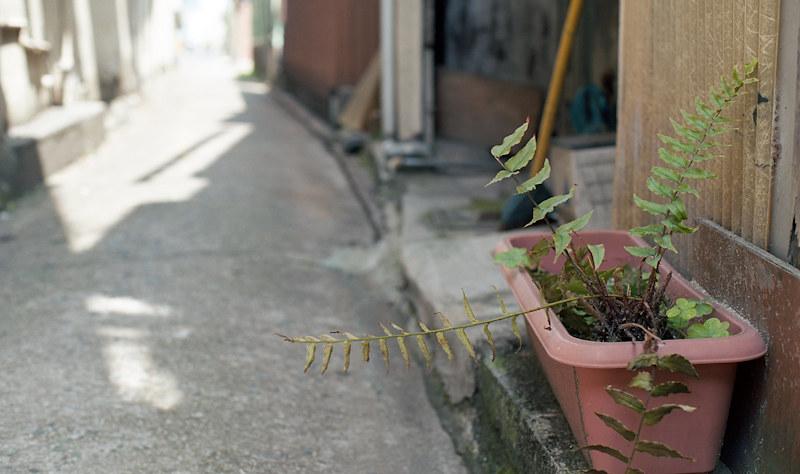 植木鉢 KODAK_EKTAR_100-73