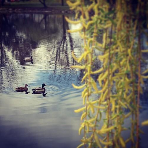 Ducks!!!!! Day_026