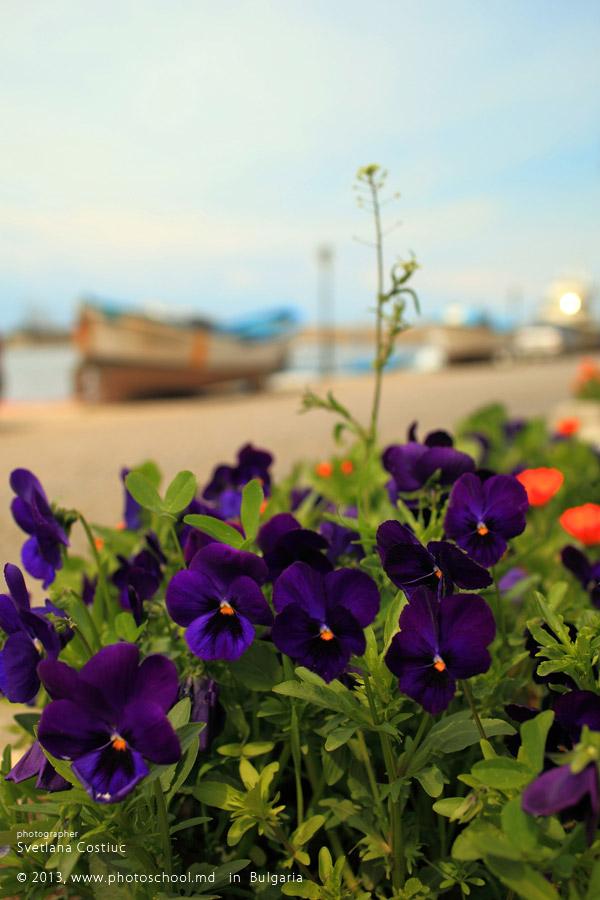 Весна 2013, Болгария, Созополь