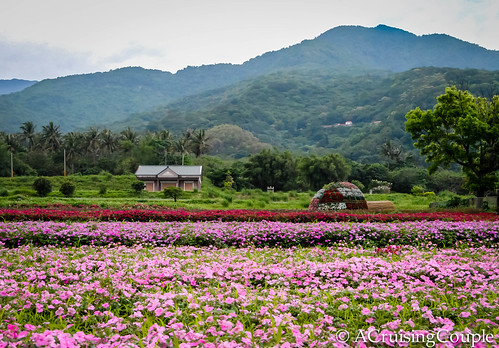 Flower Field Eastern Taiwan