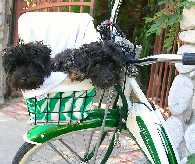 Kia & Mia all ready for a bike ride!