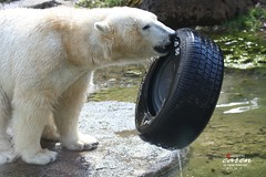 Giovanna and her Tyre Works